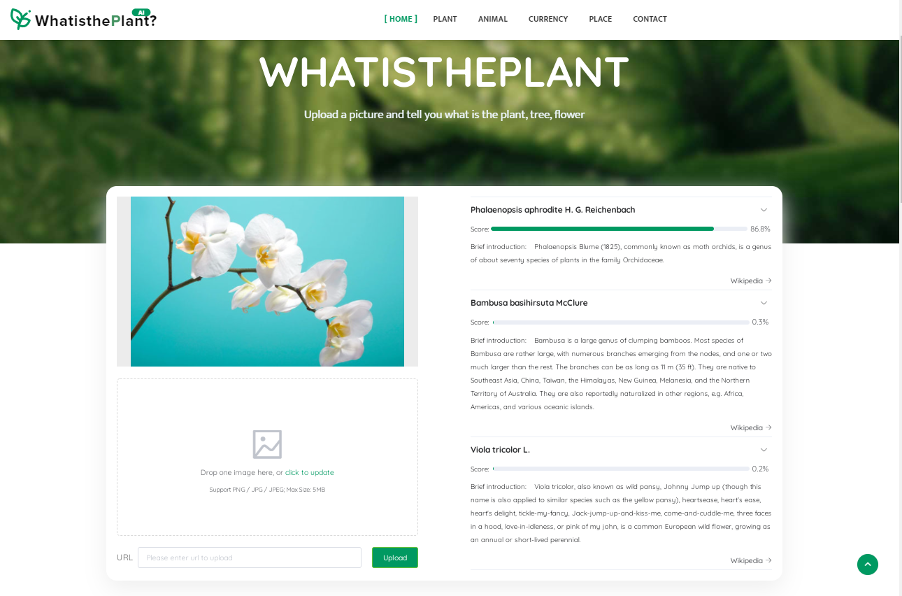 WhatisthePlant